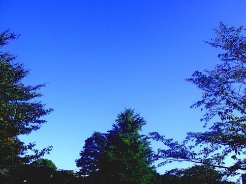草は緑で空は青